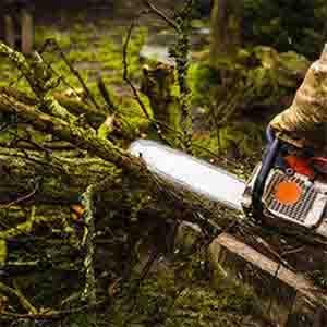 Rušenje stabala Gegić