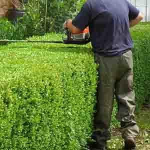 Hortikultura Gegić